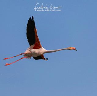 Flamingo-1315.jpg