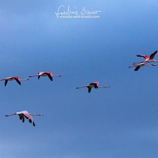 Flamingo-842.jpg