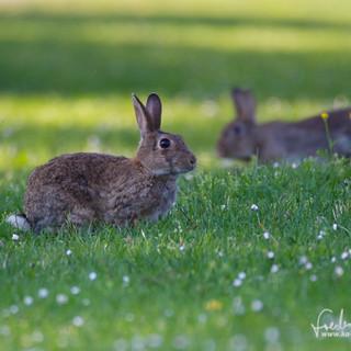 Kaninchen-8700.jpg