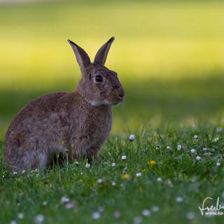 Kaninchen-8756.jpg