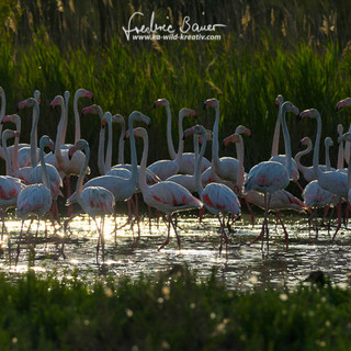Flamingo-2100.jpg