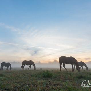 Pferde-1231.jpg