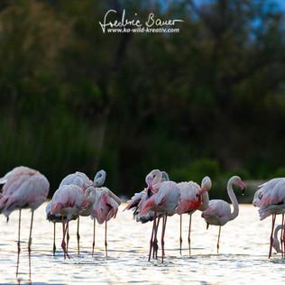 Flamingo-2623.jpg