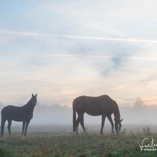 Pferde-1235.jpg