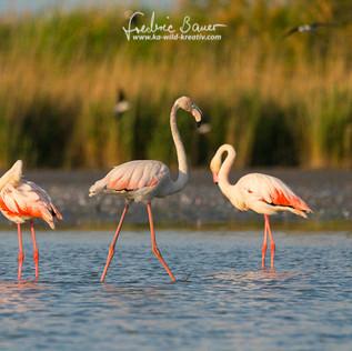 Flamingo-1956-2.jpg