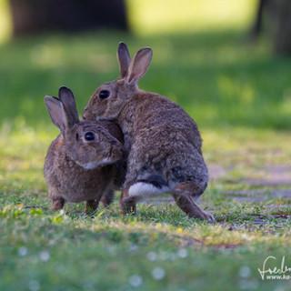 Kaninchen-9030.jpg