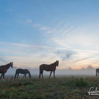 Pferde-1217.jpg