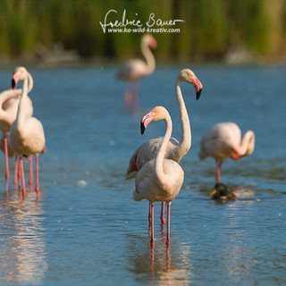 Flamingo-1317.jpg