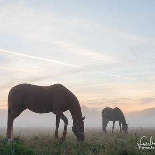 Pferde-1223.jpg
