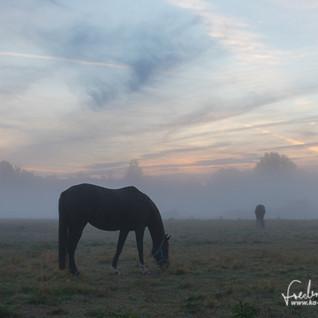 Pferde-1207.jpg