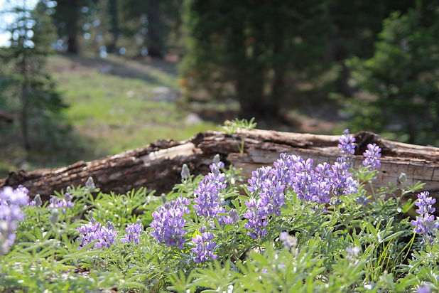 Forest Lilacs Christian Stock Image.jpg