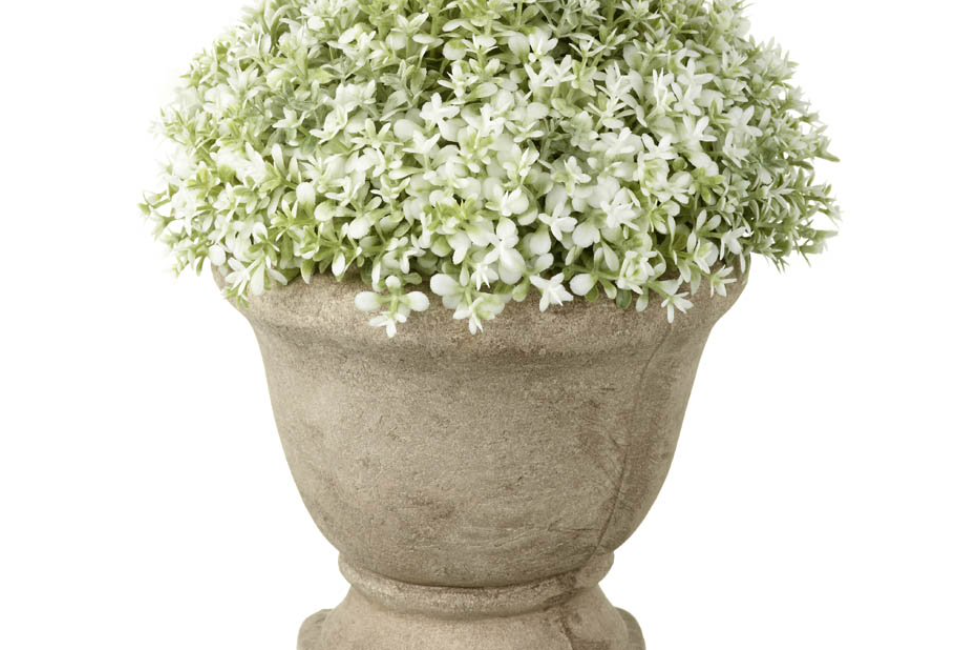 Potted Dianthus