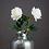 Thumbnail: Large Feel Real White Garden Rose