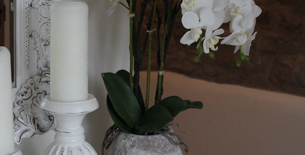 White Orchid In A Stone Pot