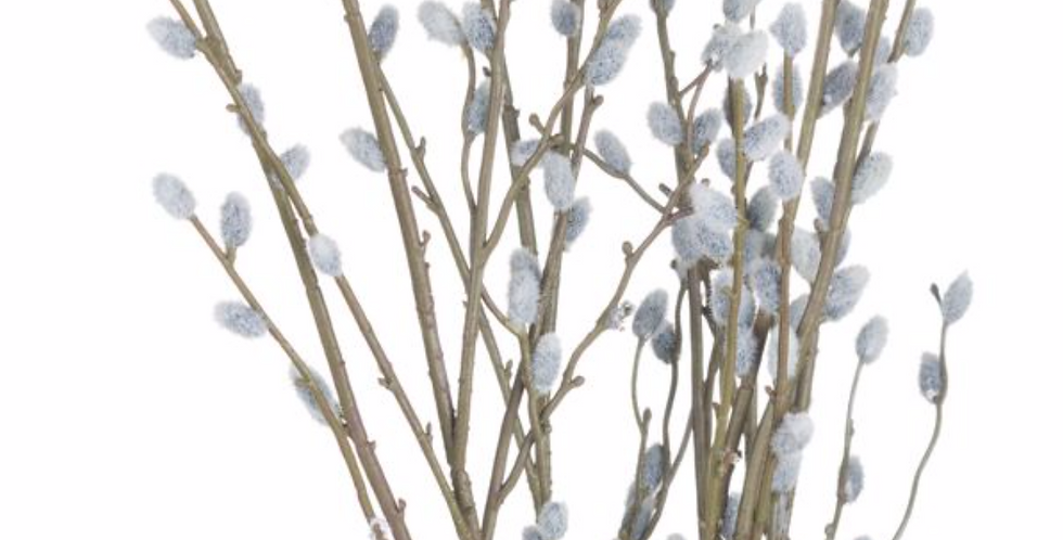 Pussy Willow Branch