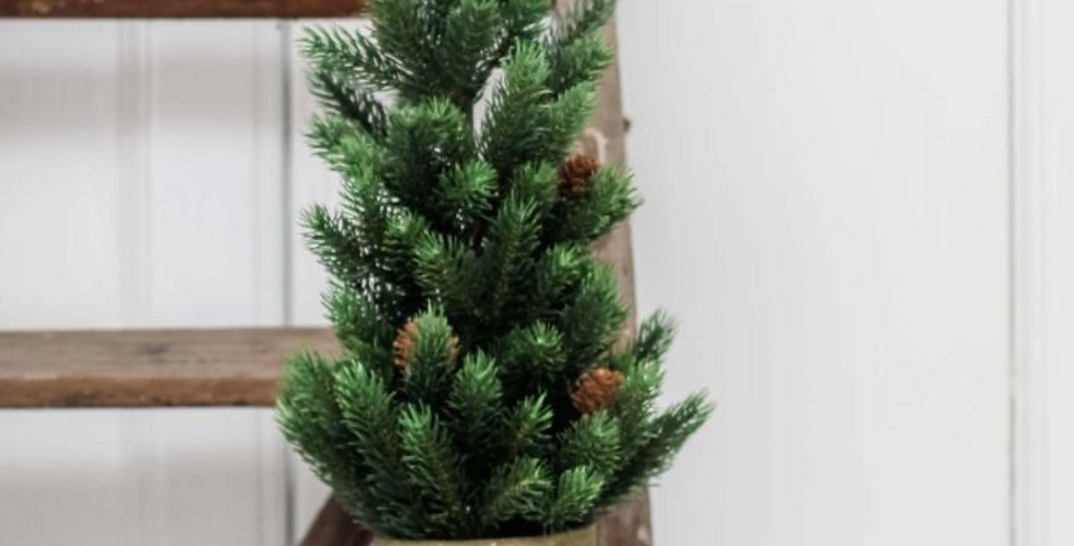 Potted Fir Tree
