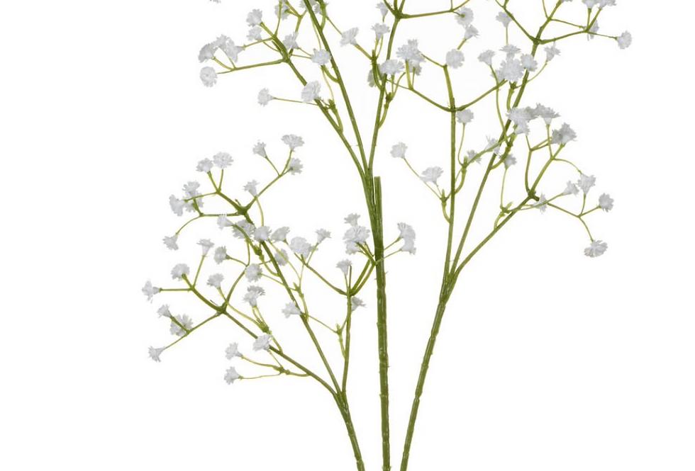Gypsophila Spray
