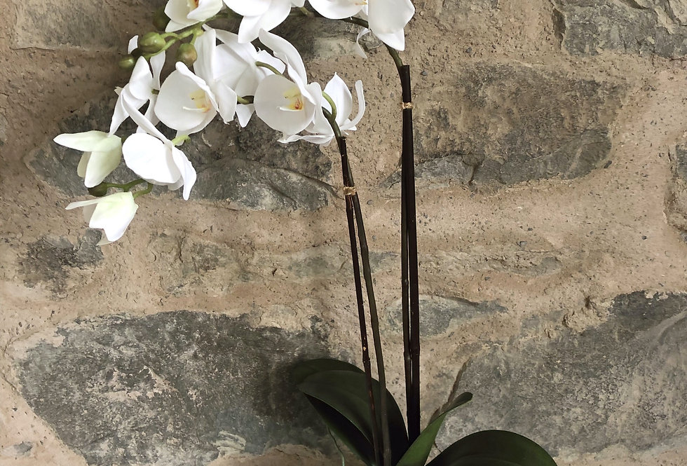Orchid In White Wave Edge Pot