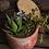 Thumbnail: Faux Potted Succulent