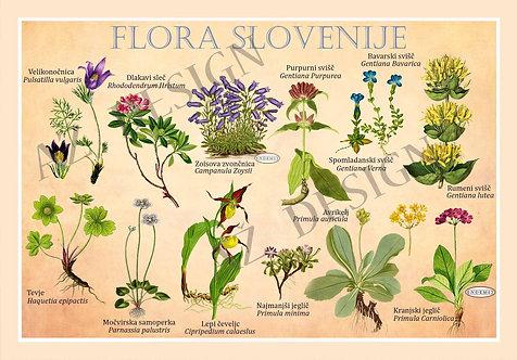 Flora Slovenije