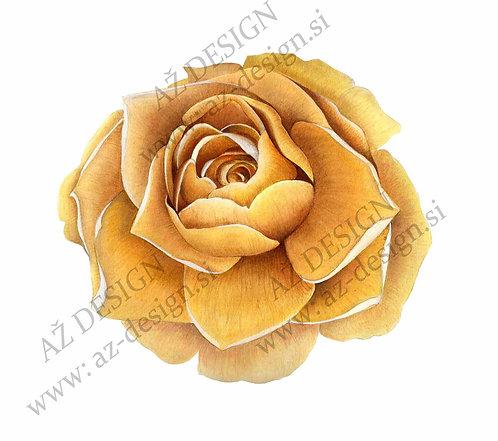 vrtnica rumena