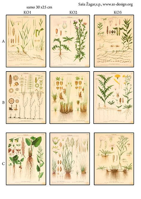 Botanica 23