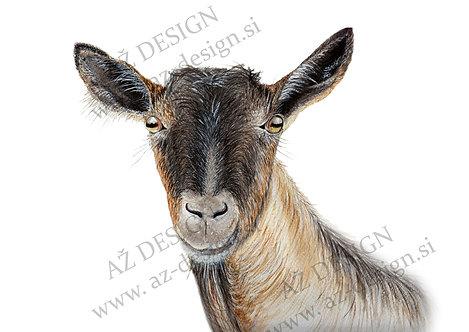 Drežniška koza, kozliček