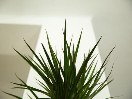 Beneficios de trabajar con plantas vivas