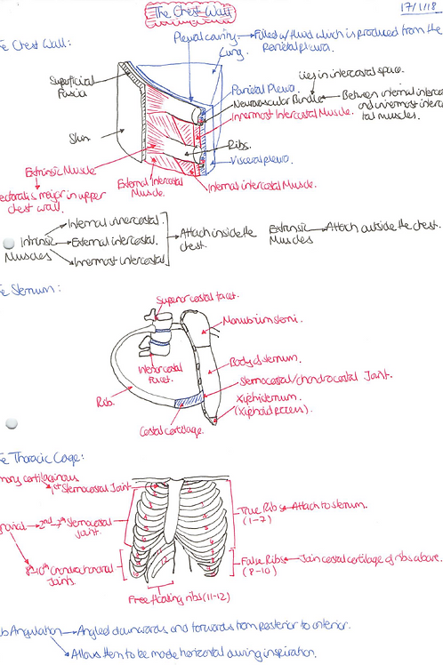 Medicine Year 1 Notes - Foundations of Biomedical Science 2 Module Only
