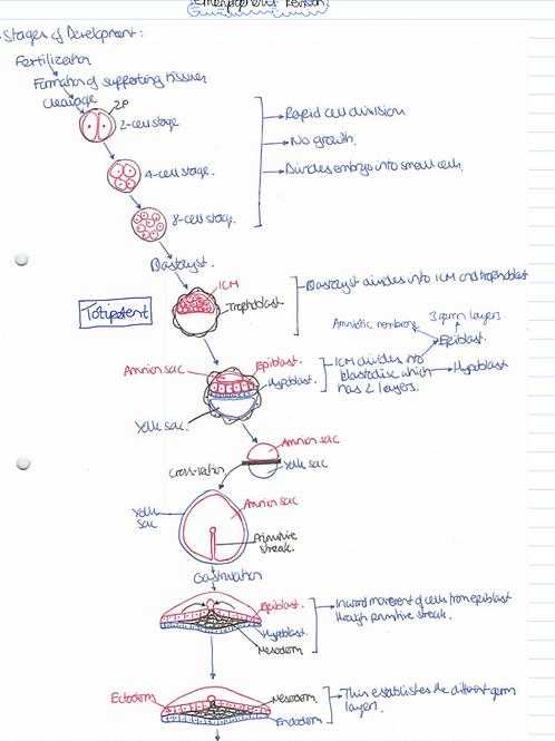 Medicine Year 2 Notes - Human Development Module Only