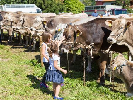 L'estate sta finendo, arriva il mercato degli animali A Ossana torna la Fera dei Set