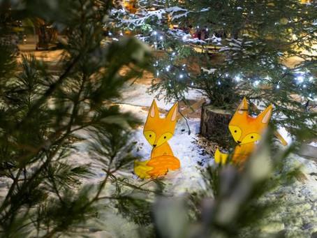 Val di Pejo, a Natale il bosco si tinge d'incanto.
