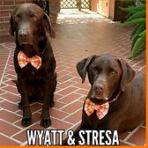 Wyatt&Stresa logo_edited_edited_edited.j