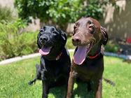 Pepper & Barkley.jpeg