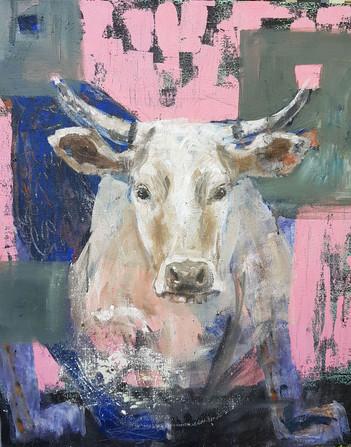 Lehmä ja ilves