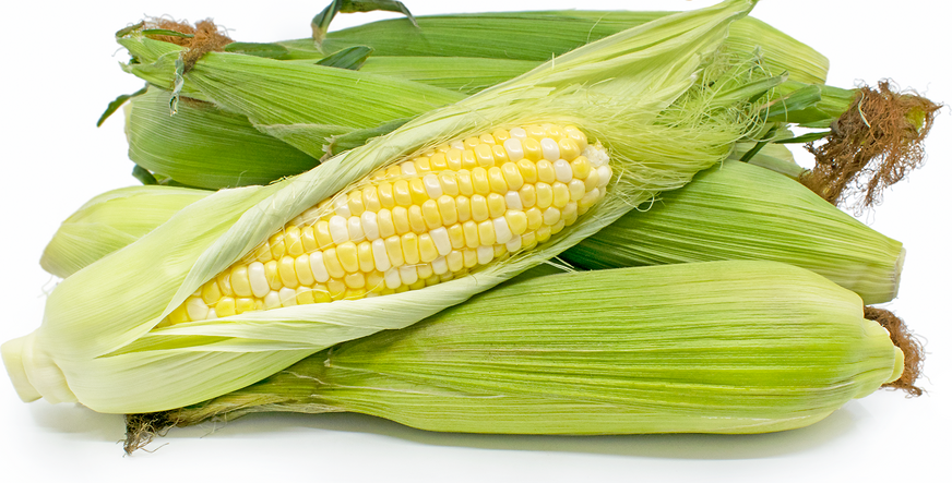 Conventional Corn 2 ears