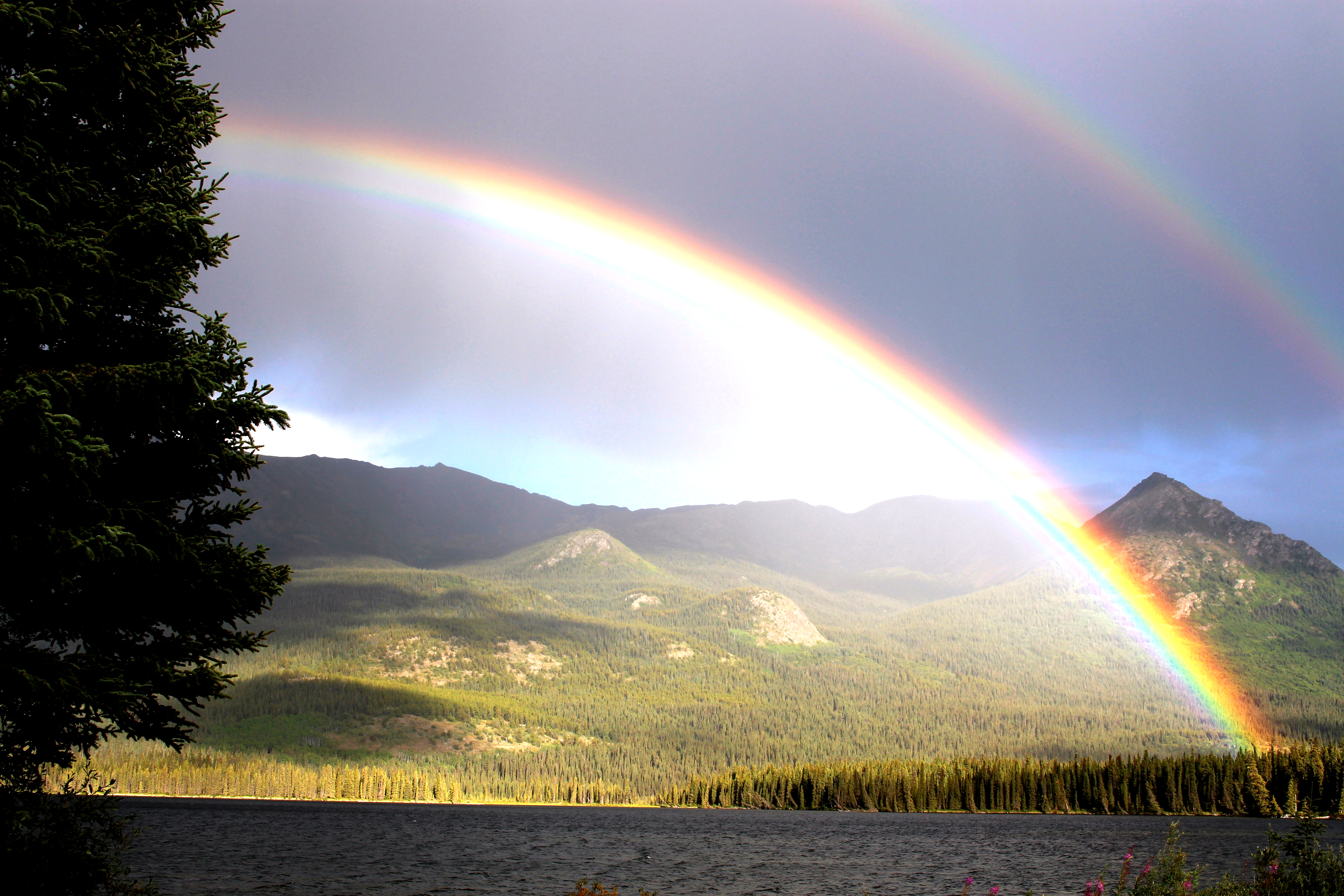 rainbow-436171