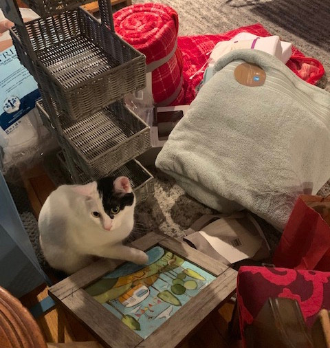 Penny the cat approves camper decor items!