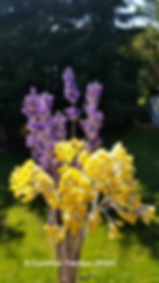 ©_Lavender_Helichrysum_vertical_2020.pn