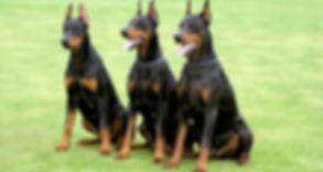 DOG GUARDD.jpg