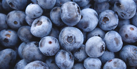 Proyecto Blueberry