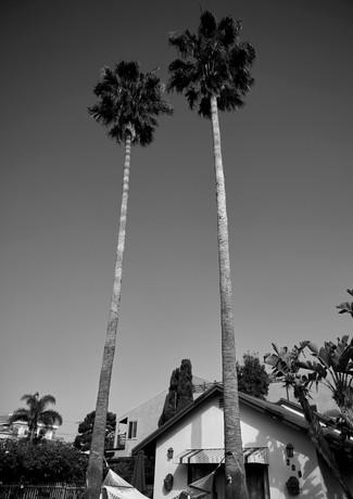 Venice Hammock