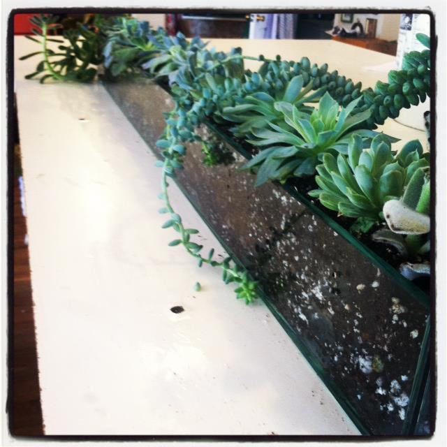 Denver Florist - succulents are great in offices!