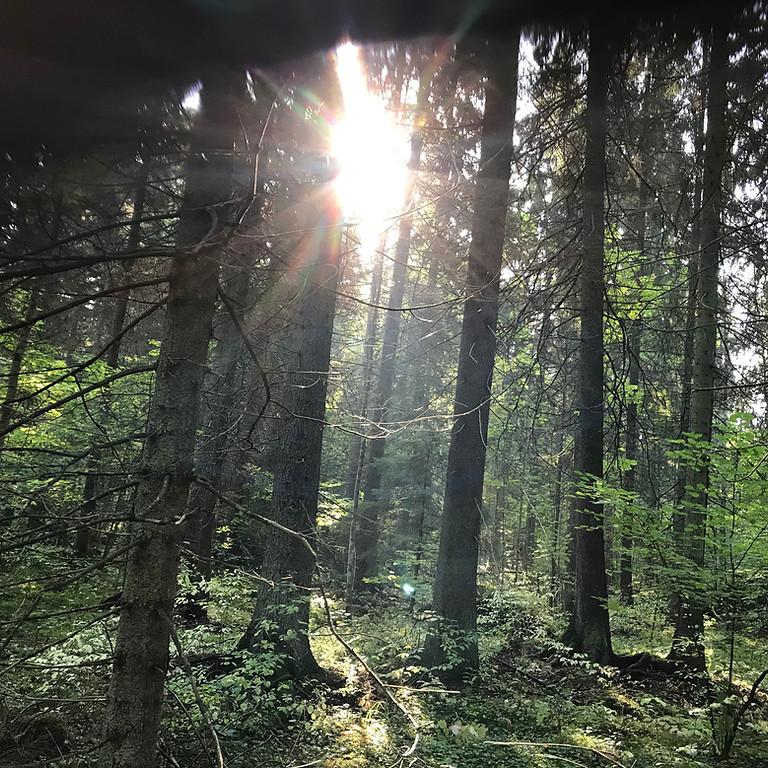 Ekerö, Kärsön: Skogsbad med meditation