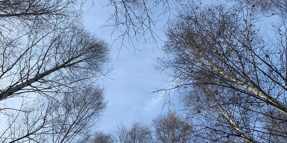 Ekerö, Kärsön: Skogsbads AW i aprilljuset