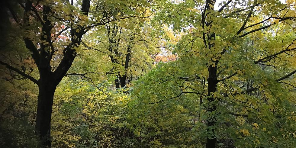 Bromma: Lunchskogsbad i Ålstens ljuvliga natur