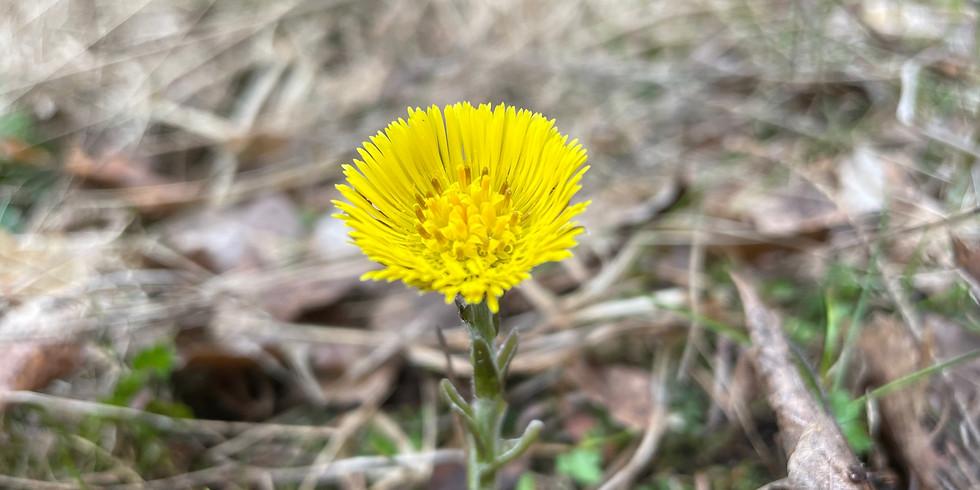 Ekerö, Kärsön: Skogsbads-AW i aprilljuset