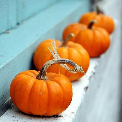 Jack-B-Little Pumpkin