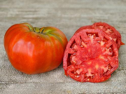 Beefsteak Tomato Plant Start (Pre-Order)