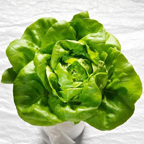 Lettuce Variety 6 Pack